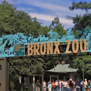 bronx-zoo-photos